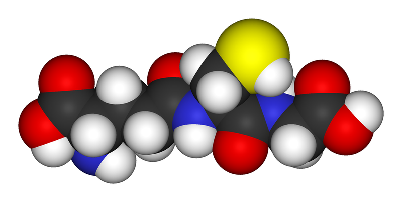 Glutathione molecule, which increases male fertility